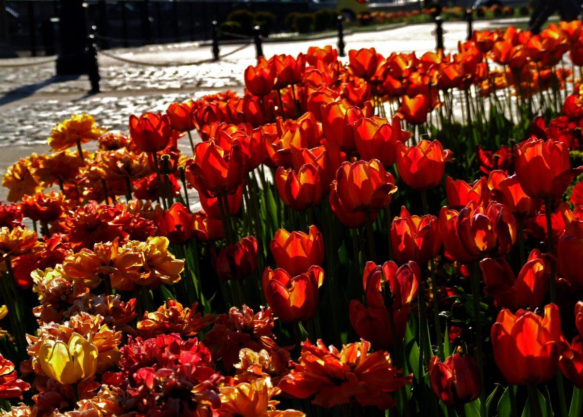 Пролетна привечер Пламъци